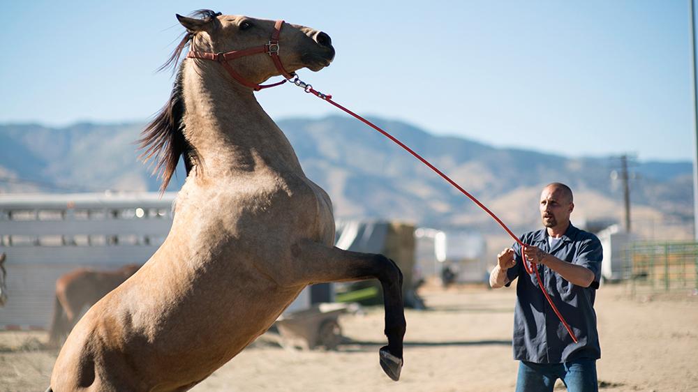 Mustang horses prisoner reform