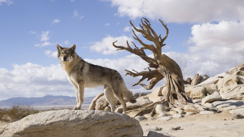 """Image from the movie """"Alpha"""""""