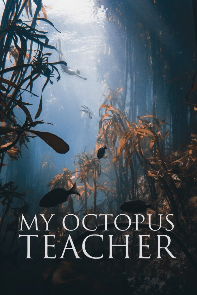 The Octopus Teacher